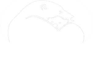 Polarbear International